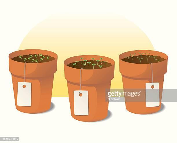 herb garden - basil stock illustrations, clip art, cartoons, & icons
