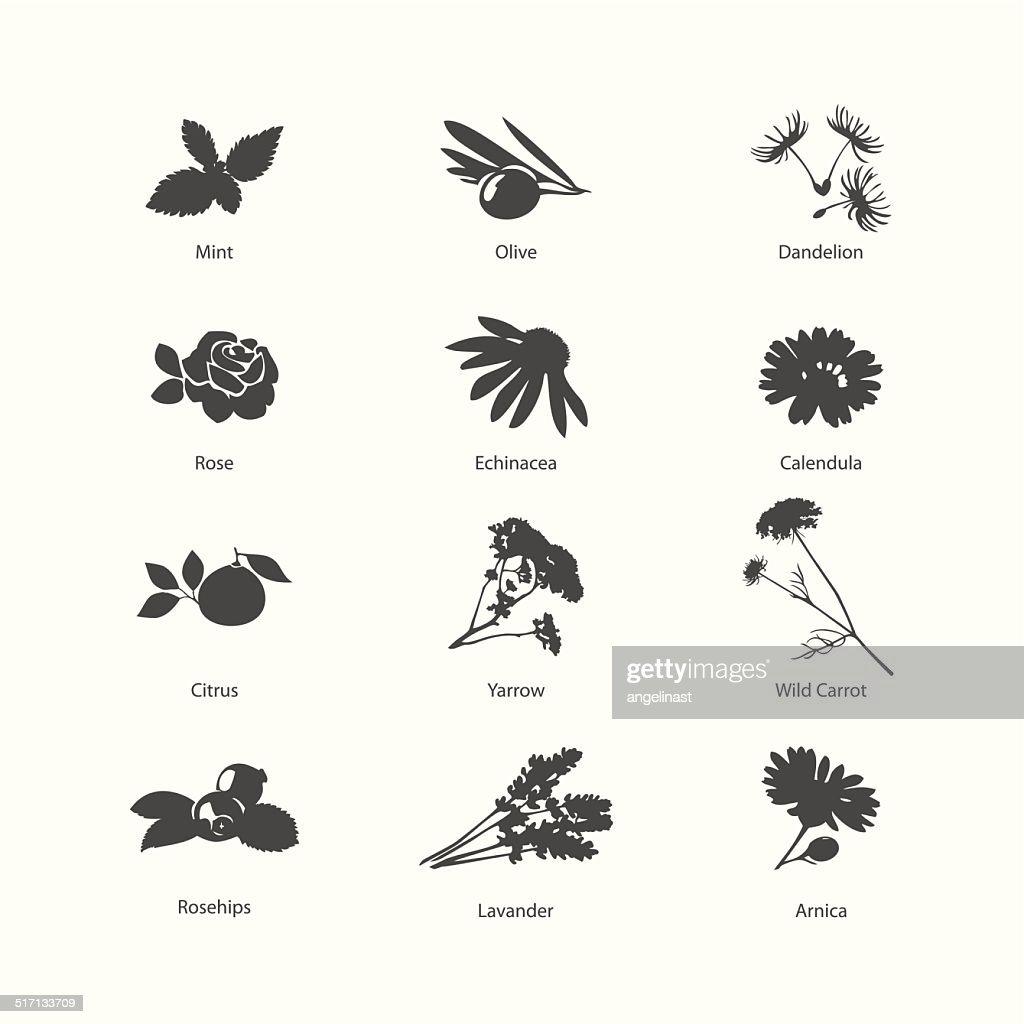 Herb symbols set