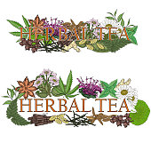 Herbal tea. Illustration of name with flowers and leaves for a tea bar.