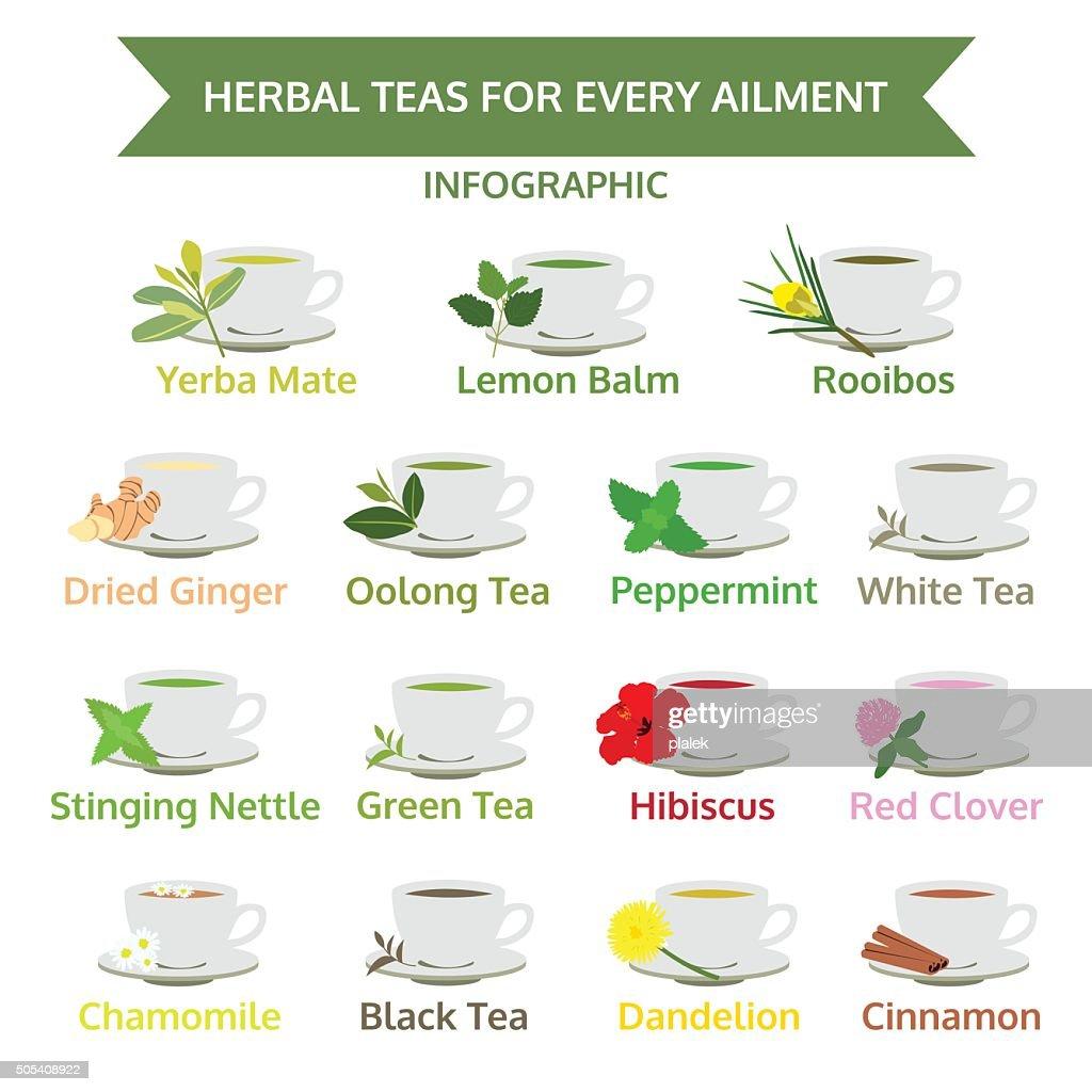 herbal teas for ailment, healthy food, herb vector