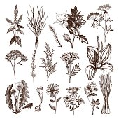Herbs and Weeds Collection