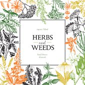 Herbs and weeds design