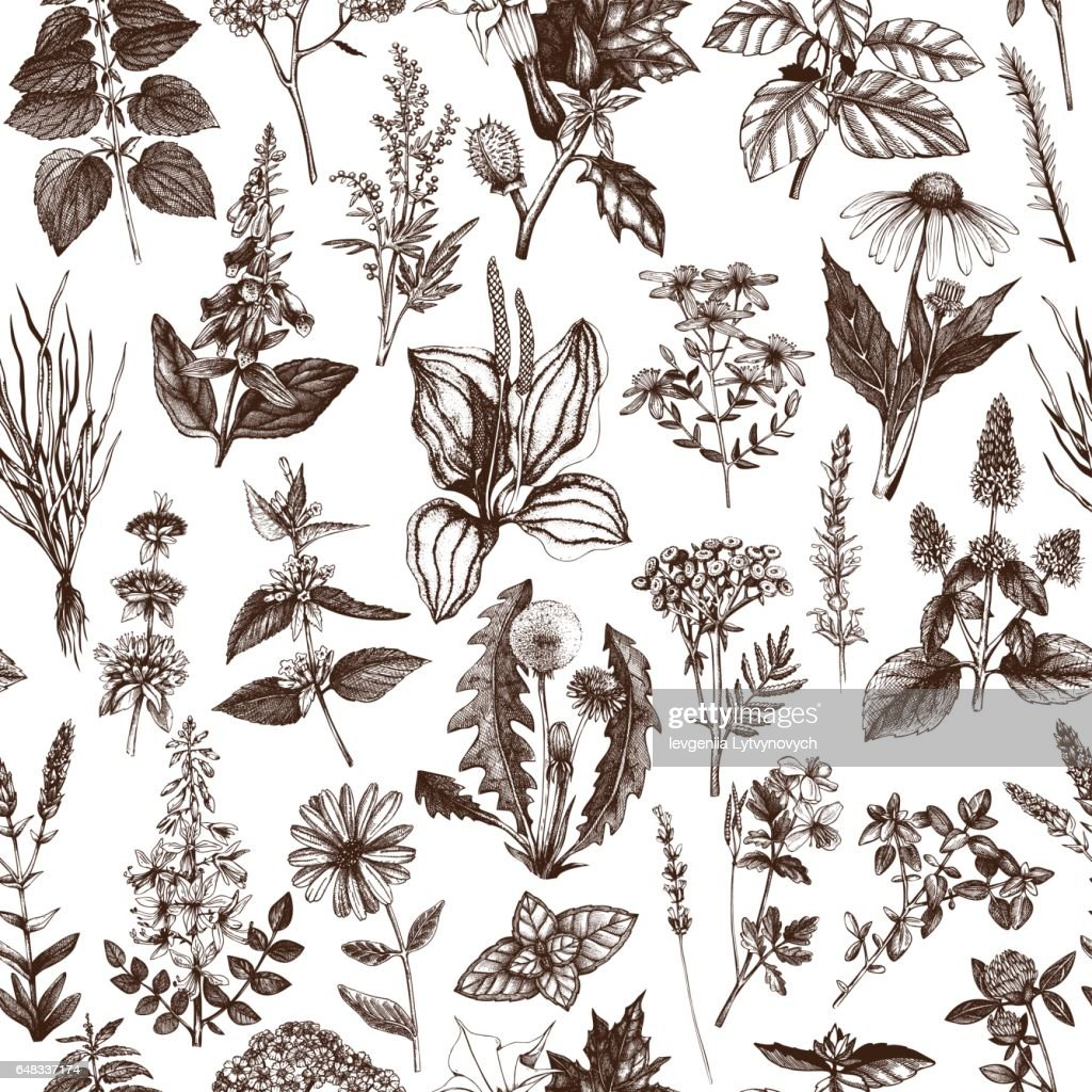 Herbs and weeds pattern