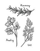 Herbs sketch set.