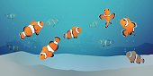 herd of clown fish under the sea