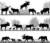 Herd of moose