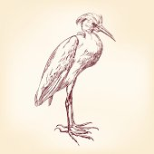 Heron hand drawn