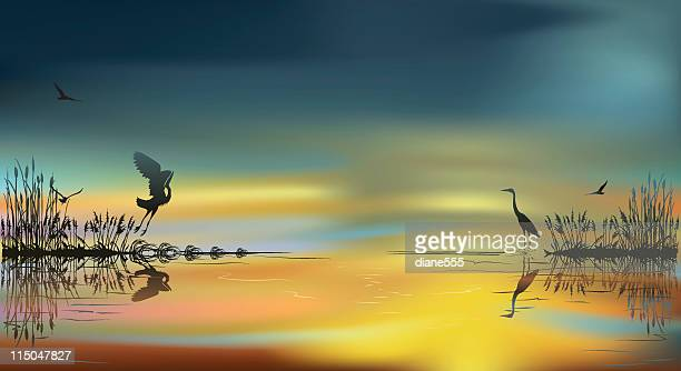 Herons bei Sonnenuntergang