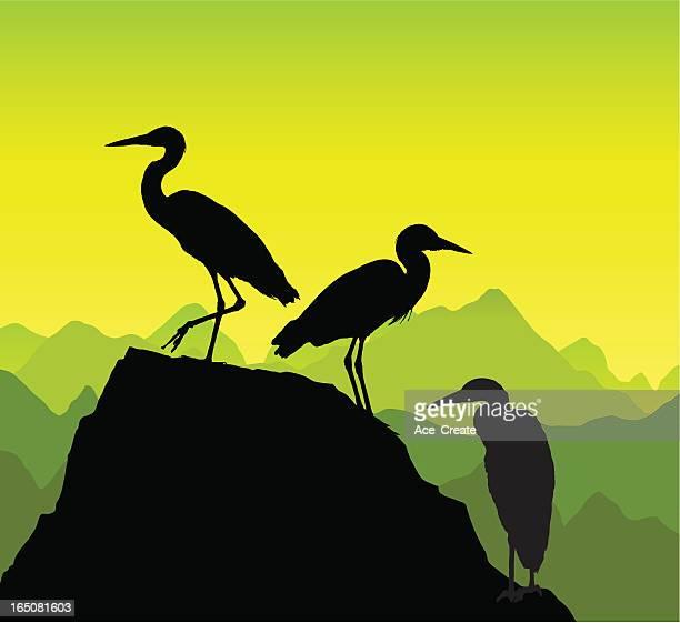 herons on a rock - crane bird stock illustrations