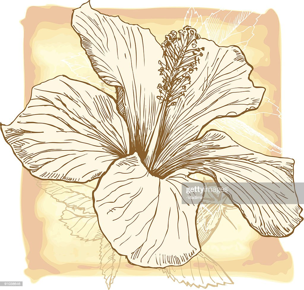 Hibiscus Flower On A Water Colour Background Vector Art Getty Images