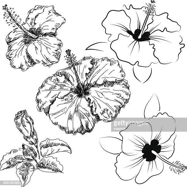 hibiscus flowers - bali stock illustrations