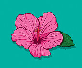 Hibiscus Hand Drawn
