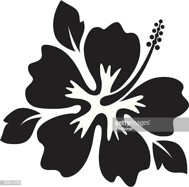 illustrations, cliparts, dessins animés et icônes de hibiscus - hibiscus