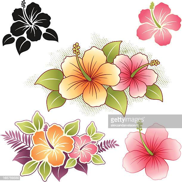 illustrations, cliparts, dessins animés et icônes de hibiscus - fleur tropicale