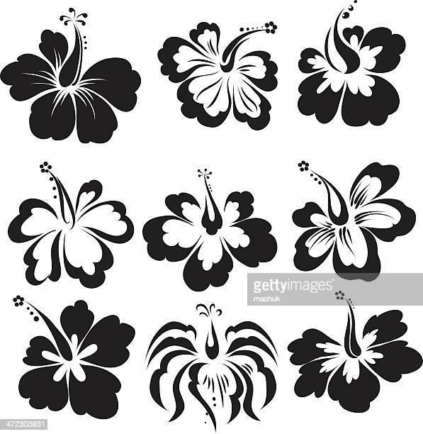 hibiscus - bali stock illustrations
