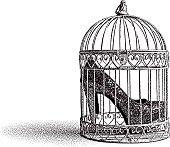 High Heel Shoes in Birdcage