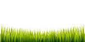 High quality realistic grass border. Vector illustration element for different uses
