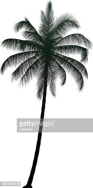 highly detailed palm tree - coconut palm tree stock illustrations, clip art, cartoons, & icons