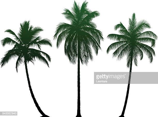 highly detailed palm trees - coconut leaf stock illustrations, clip art, cartoons, & icons