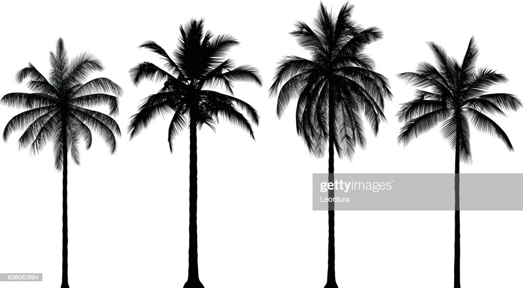 Highly Detailed Palm Trees : stock illustration