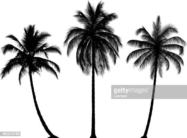 highly detailed palm trees - coconut palm tree stock illustrations, clip art, cartoons, & icons