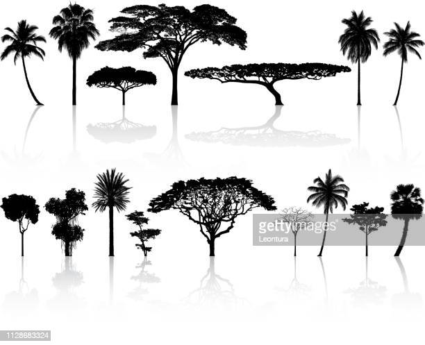 highly detailed tree silhouette - tropical tree stock illustrations