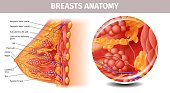 Highly Detailed View of Healthy Female Breast
