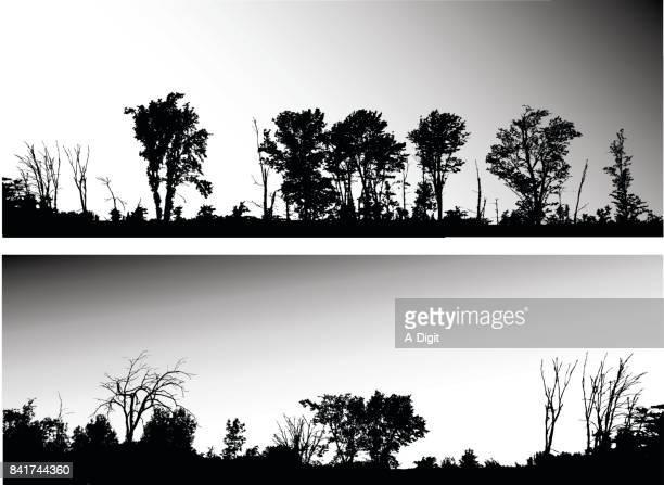 Autobahn Baumgrenze