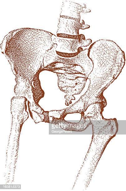 ilustraciones, imágenes clip art, dibujos animados e iconos de stock de junta de cadera - femur