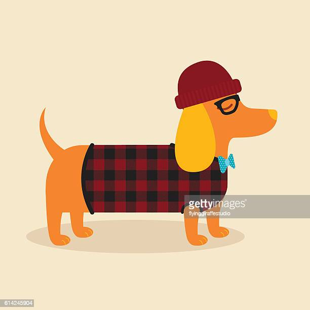 hipster dachshund - sweater stock illustrations, clip art, cartoons, & icons