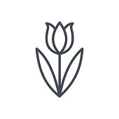 Holiday Easter Line Icon Tulip Flower
