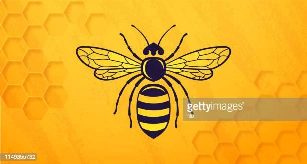 illustrations, cliparts, dessins animés et icônes de ruche abeille miel - ruche