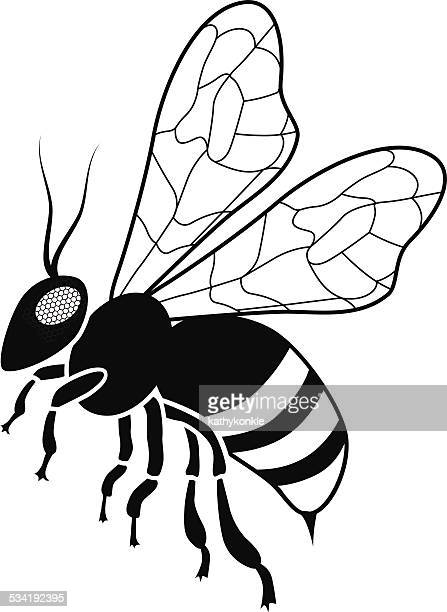 honey bee in black and white side view