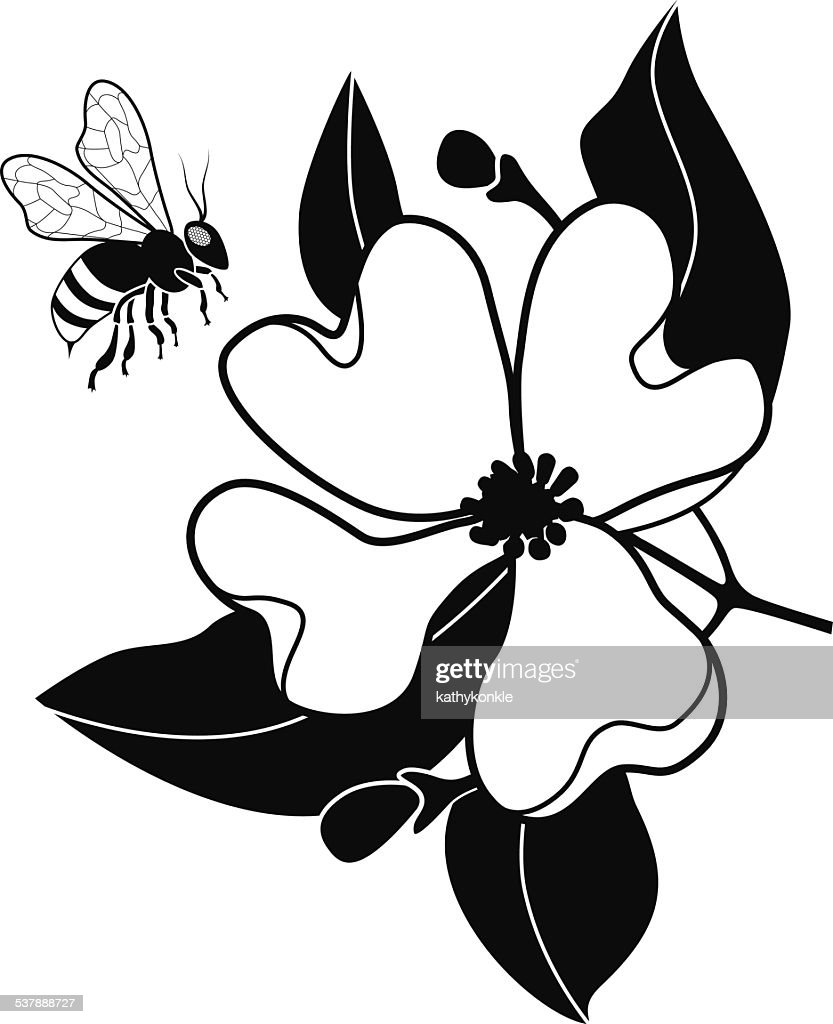 honey bee pollinating dogwood flower in black and white