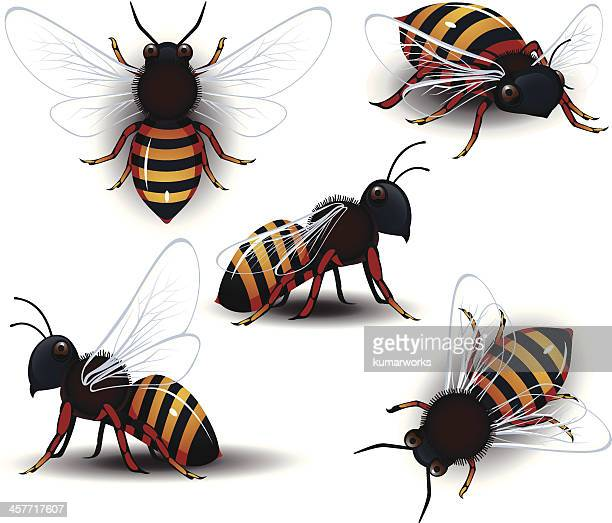 honey bee - bumblebee stock illustrations, clip art, cartoons, & icons