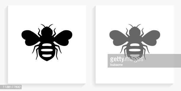 蜂蜜蜂黒と白の正方形のアイコン - ハナバチ点のイラスト素材/クリップアート素材/マンガ素材/アイコン素材