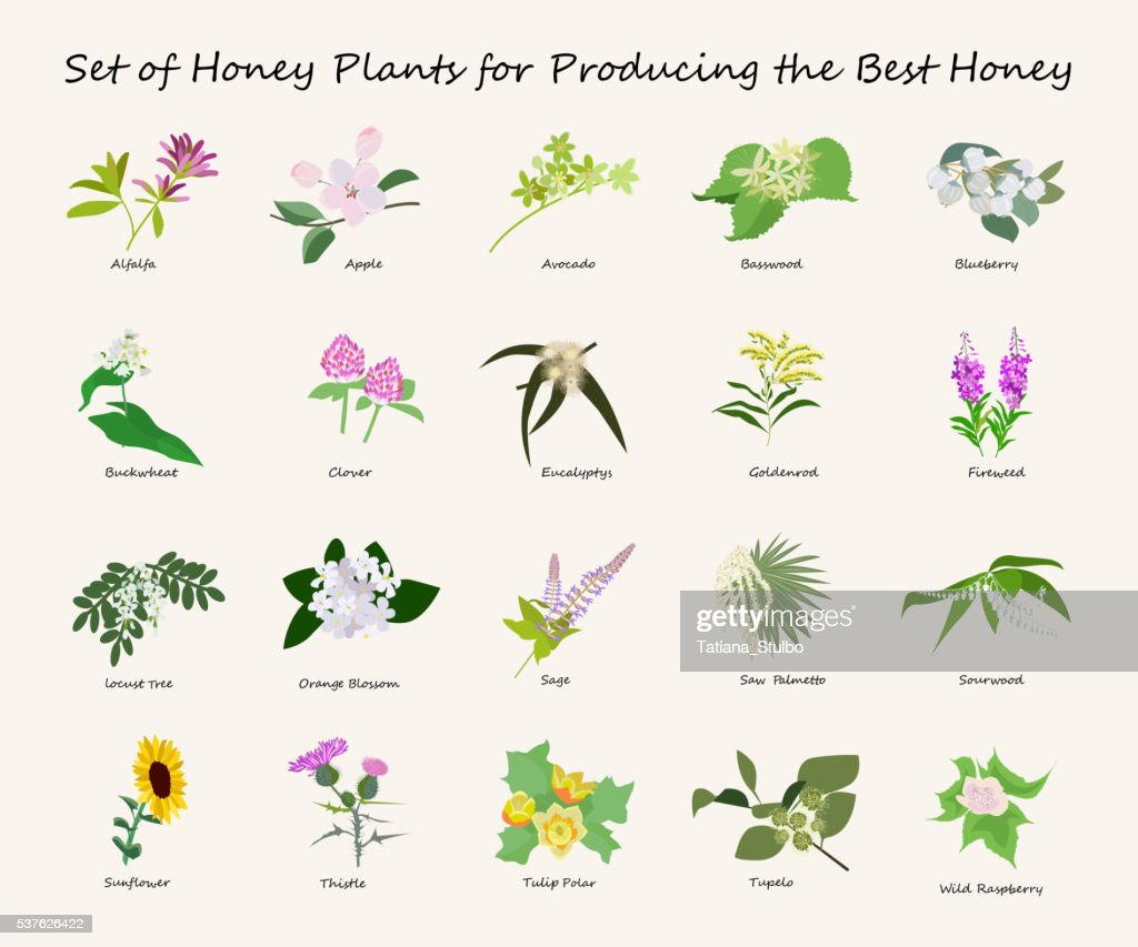honey planty set