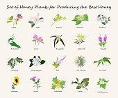 honey planty set