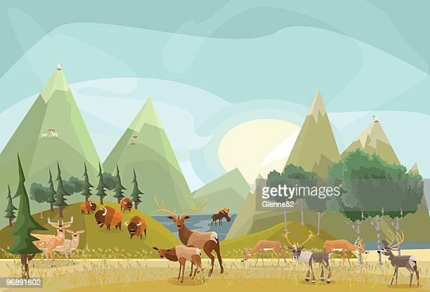 hoofed mammals of north america - elk stock illustrations