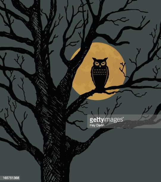 hoot of a night - owl stock illustrations