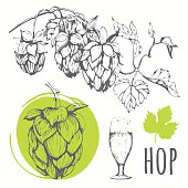 Hop set. Vector illustration with branch of hops.