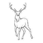Hornet deer. Linear doodle