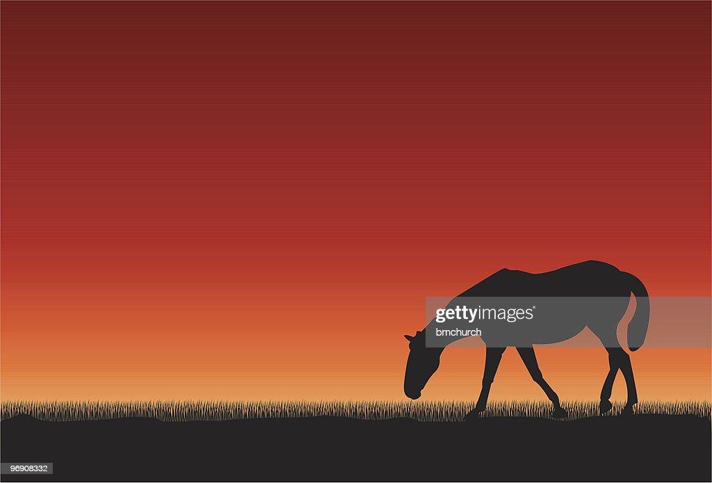 Horse at sunset : stock illustration