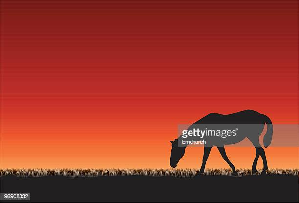 horse at sunset - paddock stock illustrations, clip art, cartoons, & icons