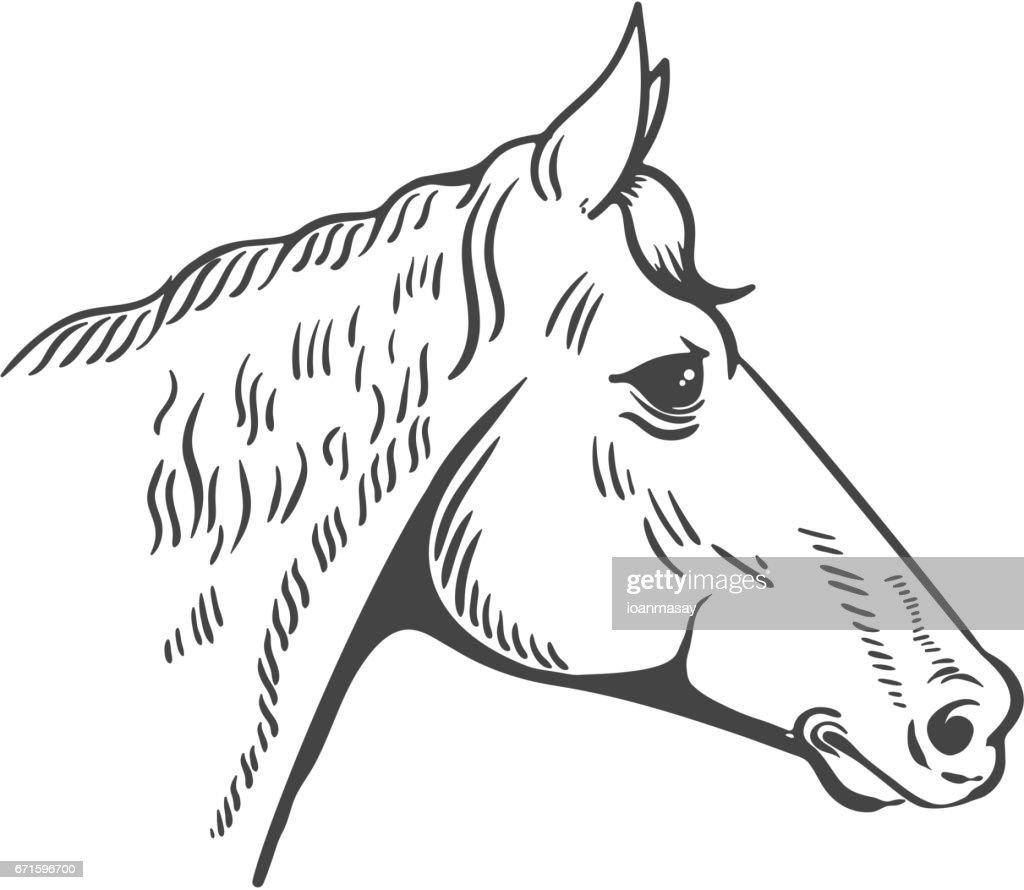 Horse head illustration isolated on white background. Design element for icon, label, emblem, sign, poster, t-shirt print. Vector illustration.