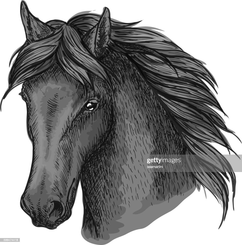 Horse head portrait with calm look