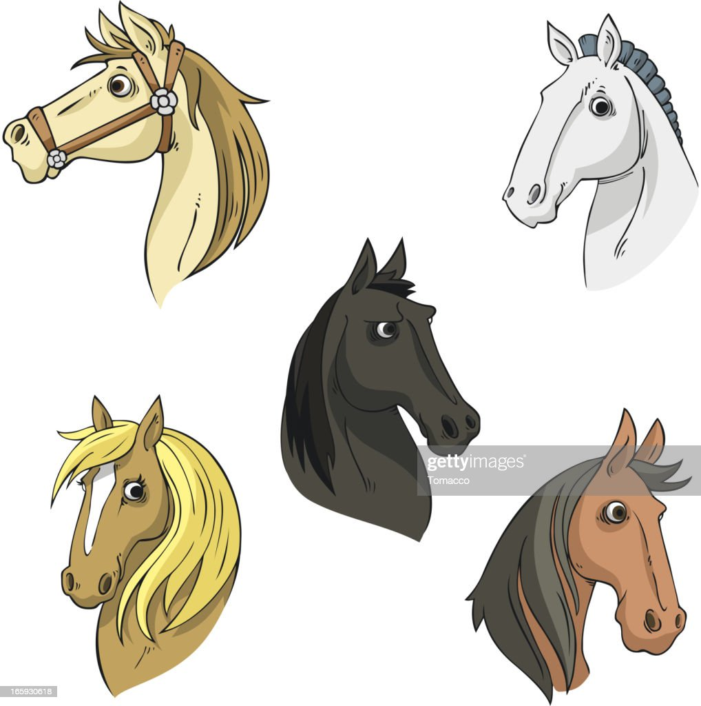 Horse Head Stallion Equine Collection Vector Illustration