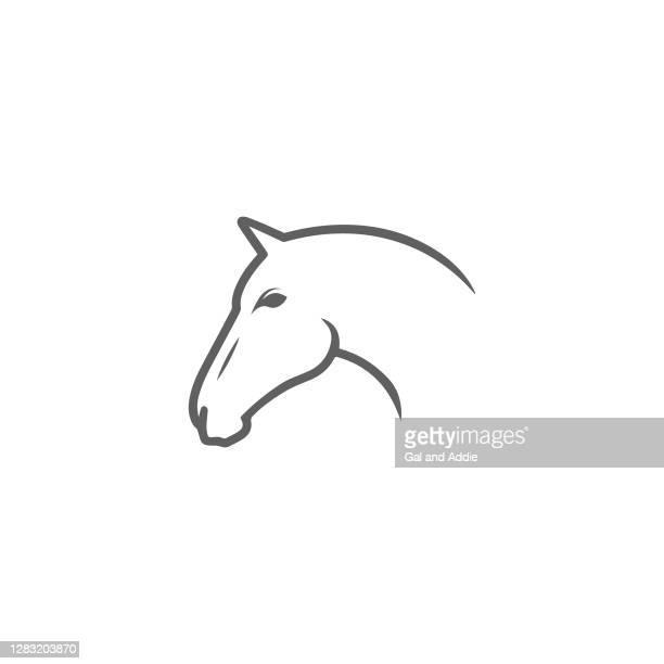 illustrazioni stock, clip art, cartoni animati e icone di tendenza di testa di cavallo - cavallo equino