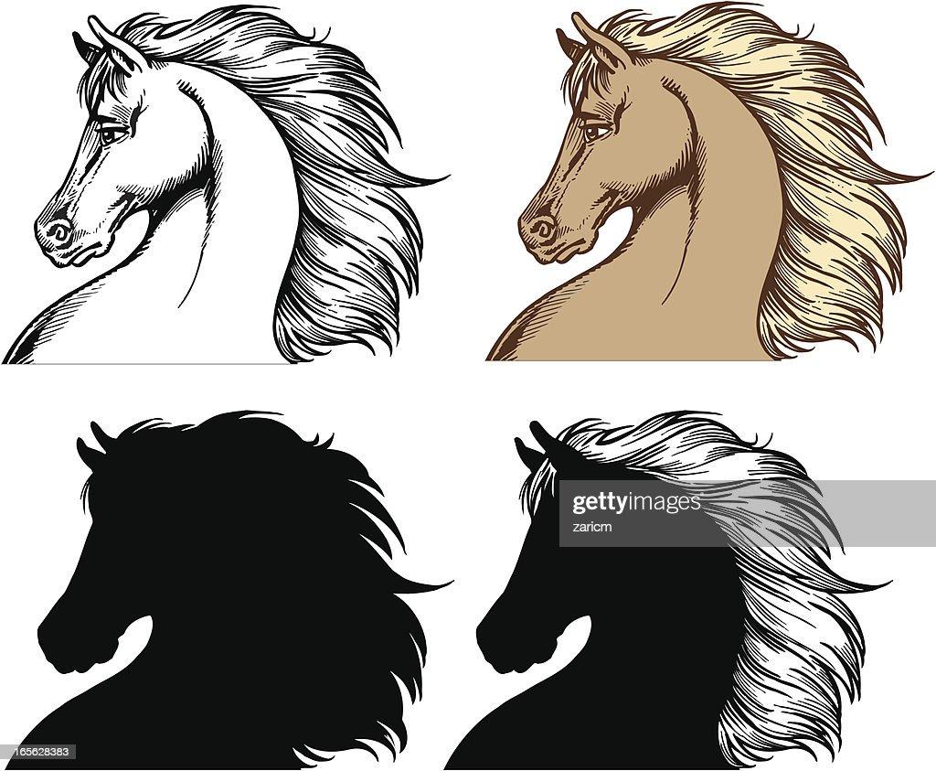 Horse heads : stock illustration