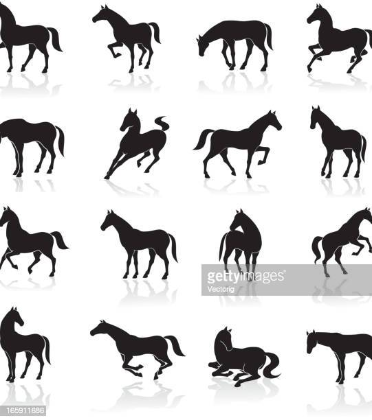 horse icon set - stallion stock illustrations, clip art, cartoons, & icons